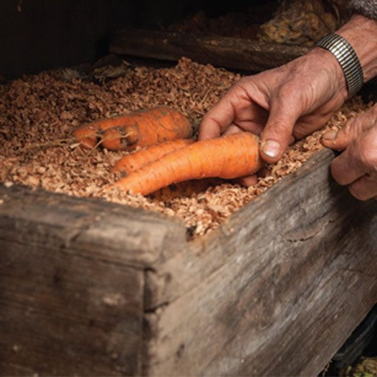 Оборудование для выращивания моркови 61