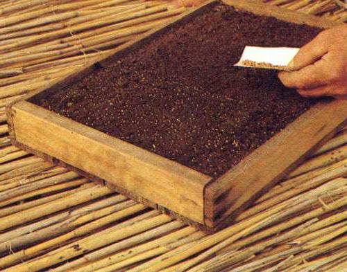 Как сажать мелкие семена 15