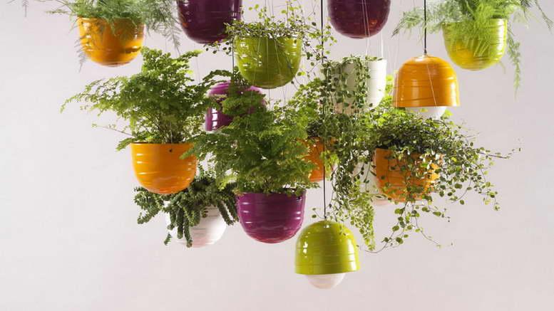 Ампельные растения для дома и сада фото и названия