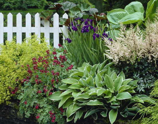 Астильба фото цветов на клумбе сочетание с хостами и ирисами