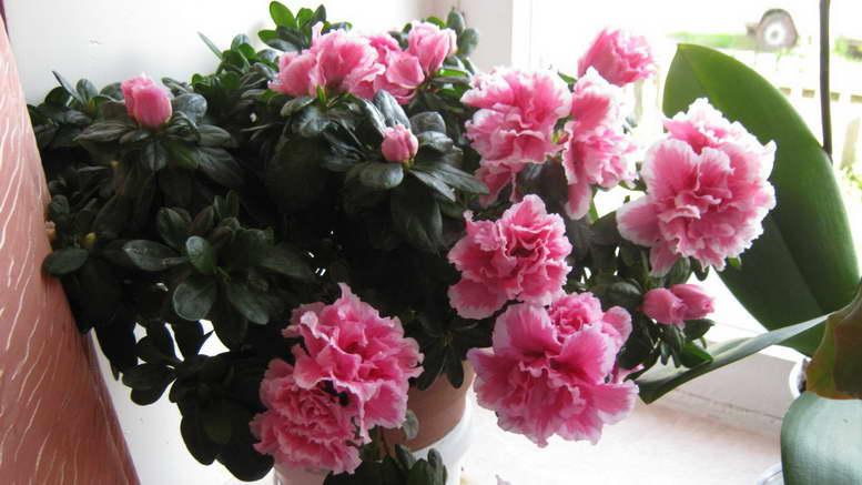 Комнатные цветы - каталог с фотографиями и названиями