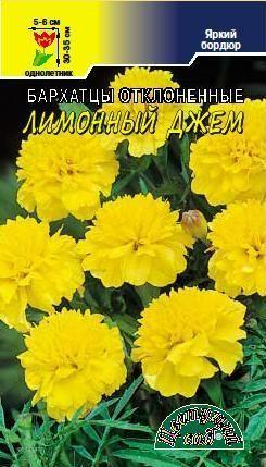 Бархатцы Лимонный джем фото