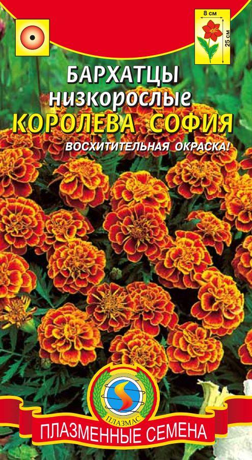 Бархатцы отклоненные сорт Королева София фото
