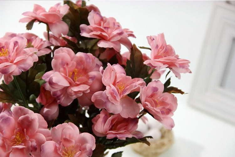 Бегония декоративноцветущая Begonia Silk Flowers фото
