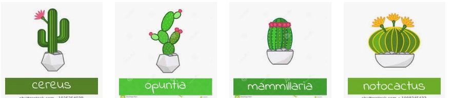 Чем отличаются разные кактусы