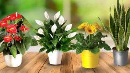 Чем подкормить комнатные цветы домашними средствами для цветения и роста