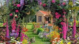 Чем подкормить цветы на даче осенью весной и летом для обильного цветения
