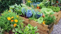 Дрожжевая подкормка для растений рецепты как приготовить