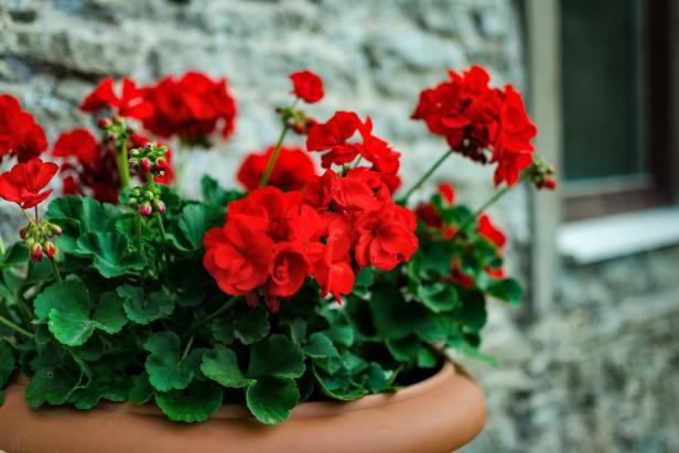 Дрожжевая подкормка для цветов рецепт