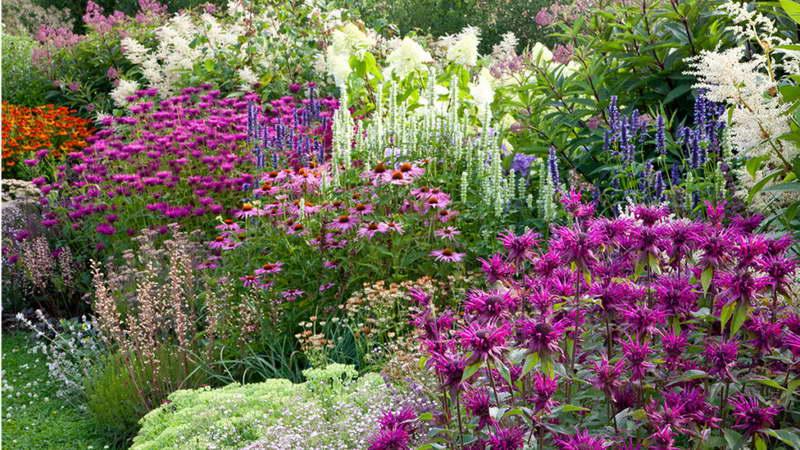 Эхинацея в ландшафтном дизайне фото с другими цветами