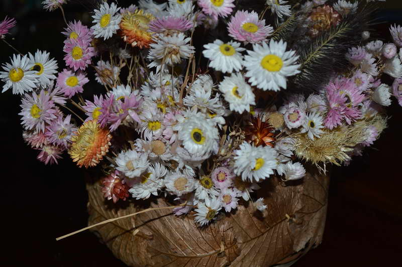 Гелиптерум во флористике фото композиции из сухих цветов