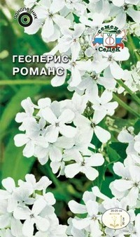 Гесперис романс выращивание из семян
