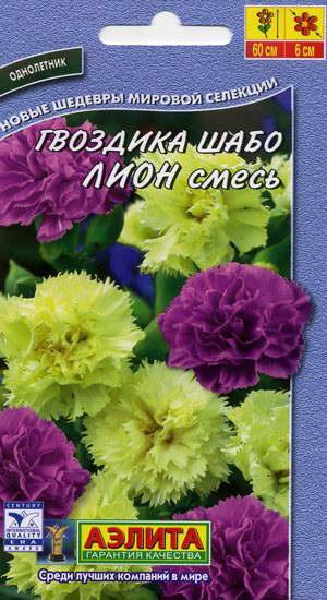 Гвоздика Шабо сорт Лион фото