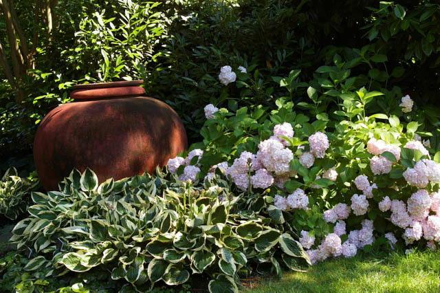 Хосты в дизайне сада ландшафтные хитрости Хоста в сочетании с гортензией фото