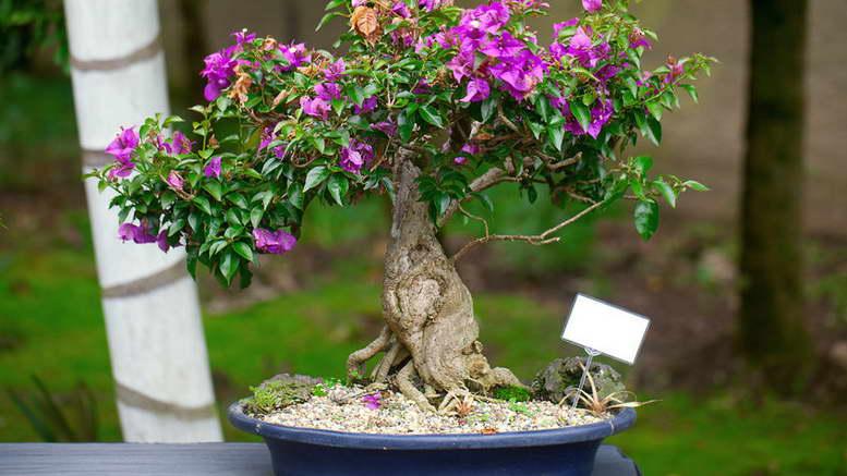 Из каких растений выращивают бонсай фото и названия
