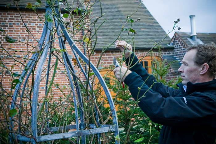 Как обрезать плетистые розы правильно фото