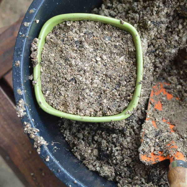 Как посадить мушмулу косточкой фото