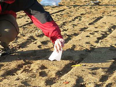Как посеять гвоздику песчаную в грунт фото