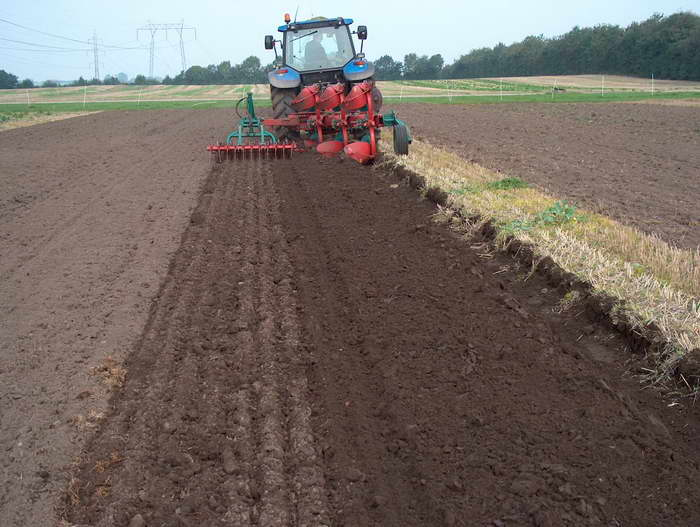 Как посеять масличную редьку агротехника