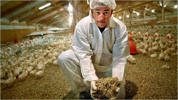 Как правильно хранить куриный помет