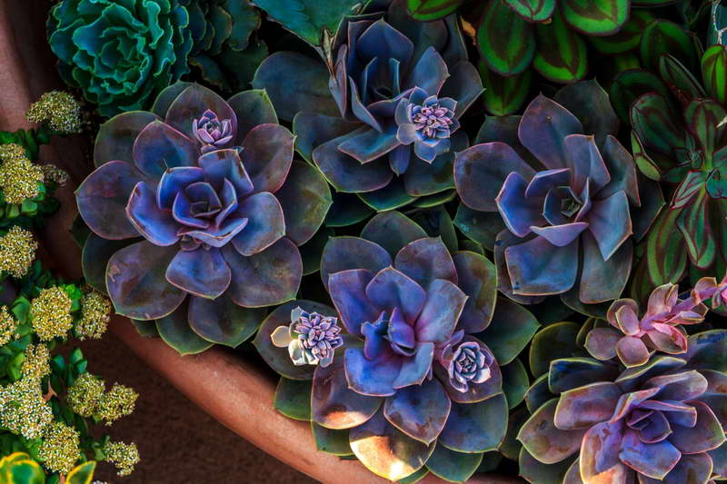 Как сделать флорариум суккулентный садик фото