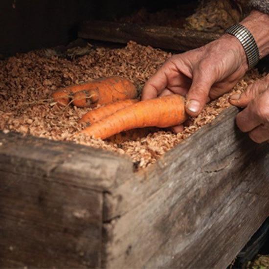 Как убрать и хранить морковь