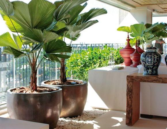 Как ухаживать за веерной пальмой в домашних условиях