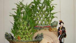 Как вырастить бамбук в домашних условиях фото