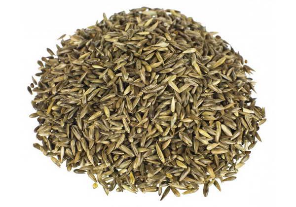 Как вырастить канареечник фалярис из семян