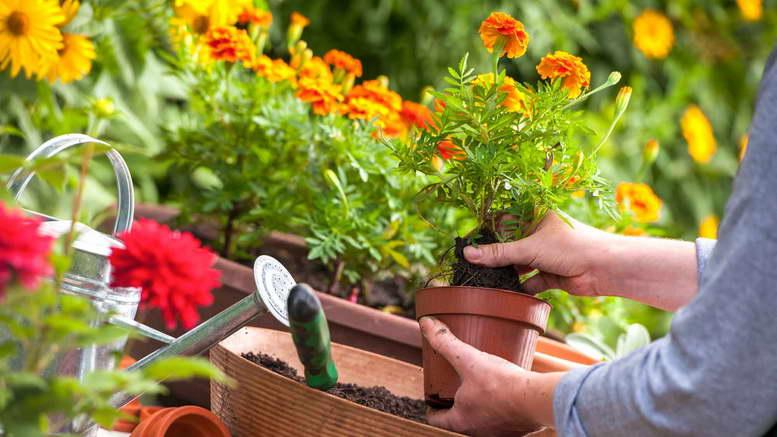Какие цветы посеять в марте на рассаду в домашних условиях
