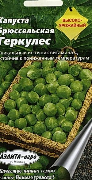 капуста брюссельская геркулес выращивание
