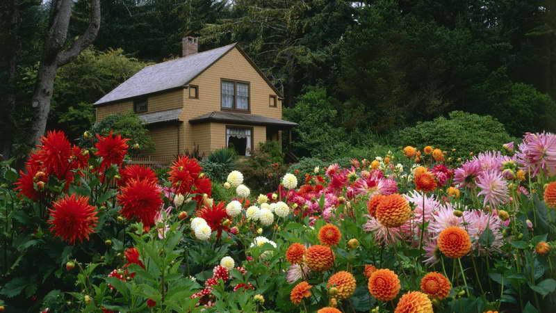 Когда высаживать георгины в грунт весной Георгины фото цветов в саду
