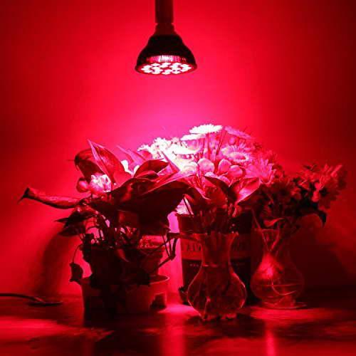 Красная фитолампа для растений
