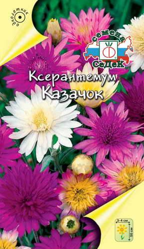 Ксерантемум Казачок фото