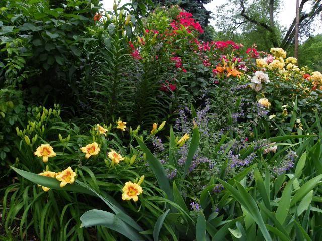 Лилейники с другими цветами на клумбе