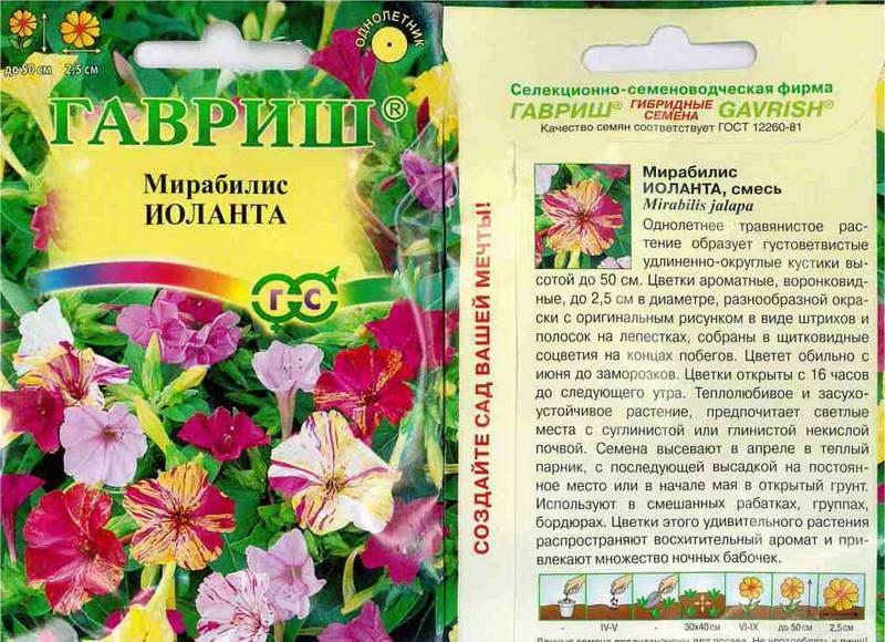 Мирабилис иоланта фото и описание