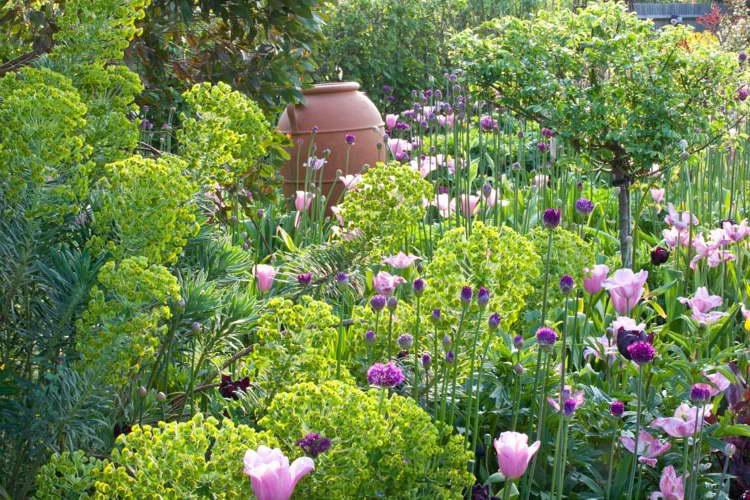 Молочай кипарисовый в дизайне сада фото