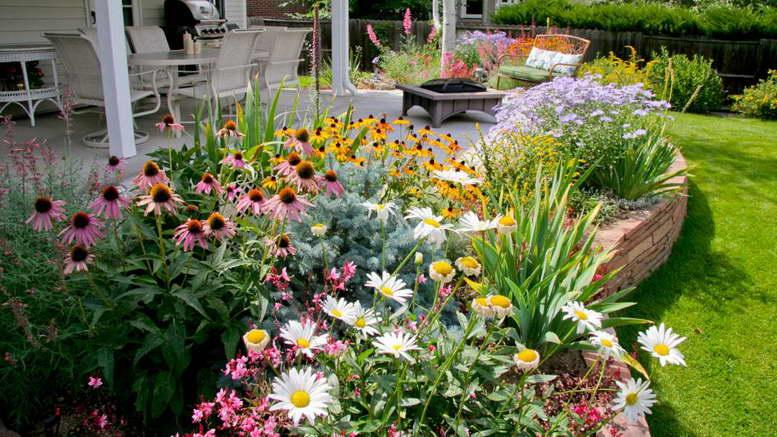 Многолетники цветущие все лето с фото и названиями