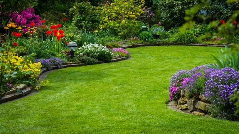 Многолетняя трава райграс пастбищный для газона фото