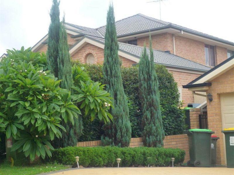 Можжевельник Скайрокет Juniperus Skyrocket фото