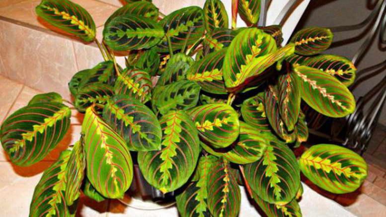 Названия декоративно лиственных растений с фото Растения для дома и сада