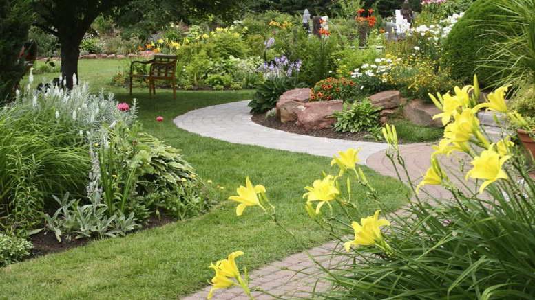 Названия растений с желтыми цветами с фото и описанием