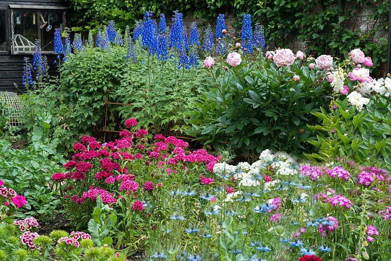 Нигелла дамасская с другими цветами фото