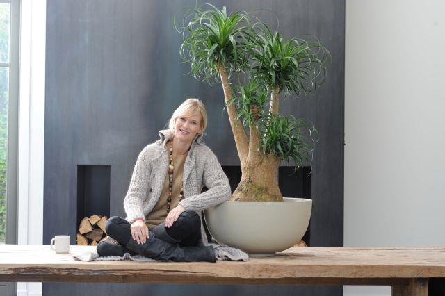 Нолина бутылочное дерево выращивание в домашних условиях