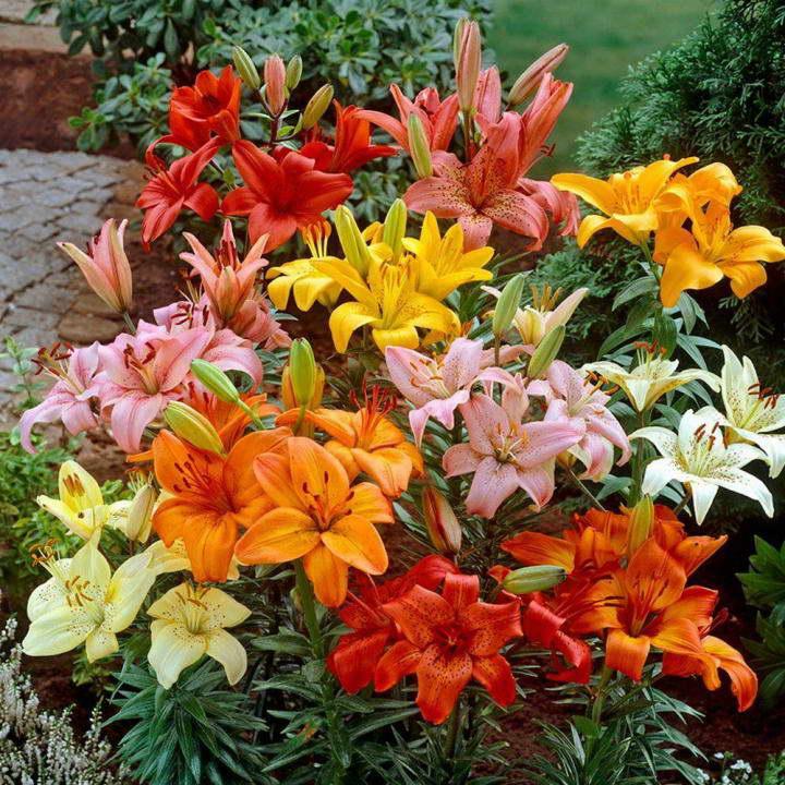 Нужно ли подкармливать лилии и какими удобрениями