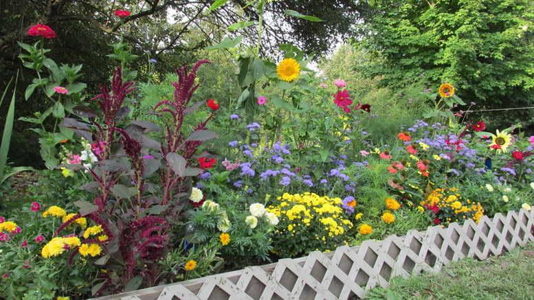 Однолетники цветущие все лето с фото и названиями