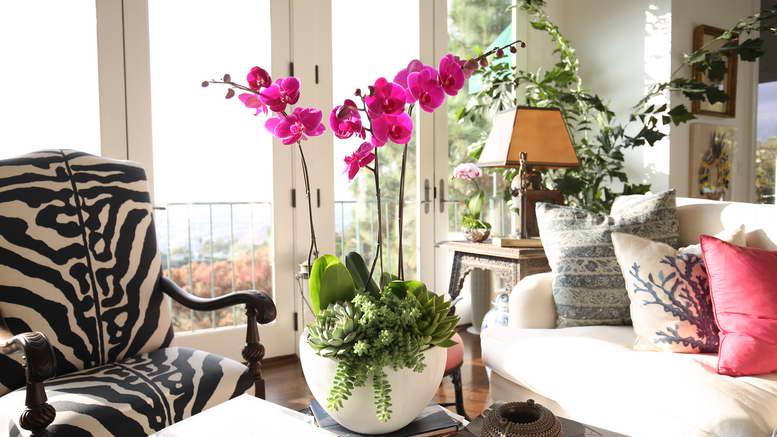 Орхидея уход в домашних условиях фото разновидностей