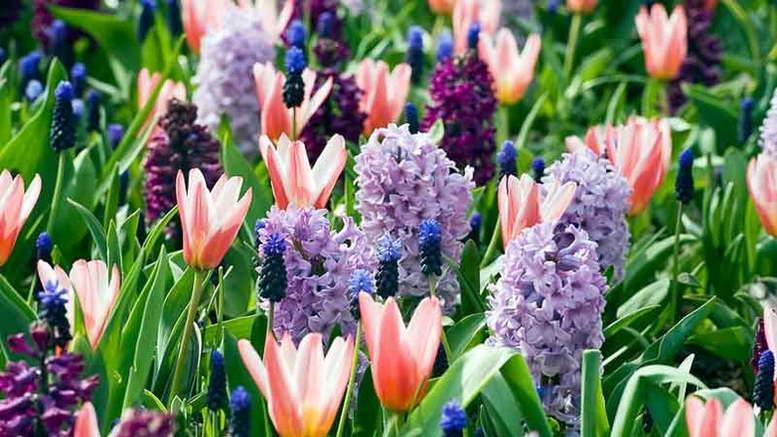 Первоцветы фото с названиями и описанием