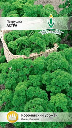 Петрушка листовая Астра фото