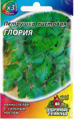 Петрушка листовая Глория фото